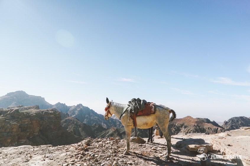 Amna's donkeys.