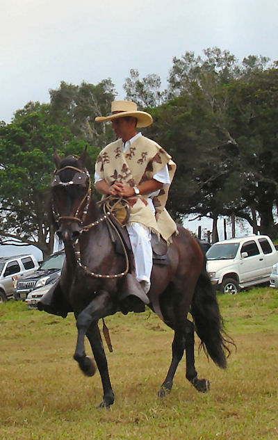Paso Fino (dancing) horses are the breed common in Panama...they are beautiful to watch