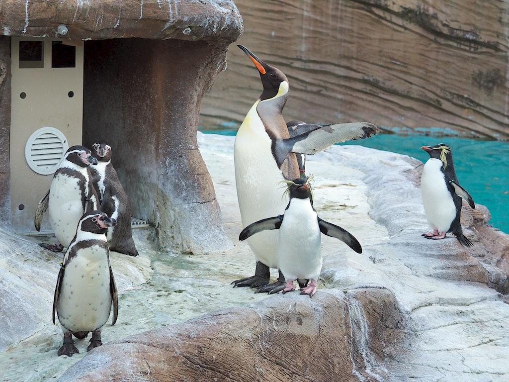 Higashiyama Zoo Penguin