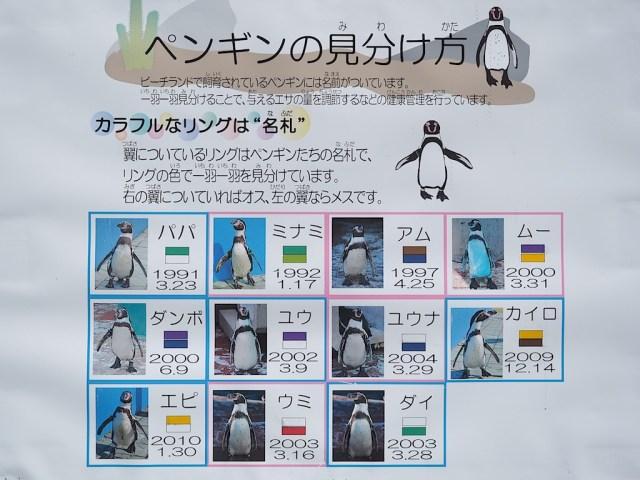 南知多ビーチランド フンボルトペンギン