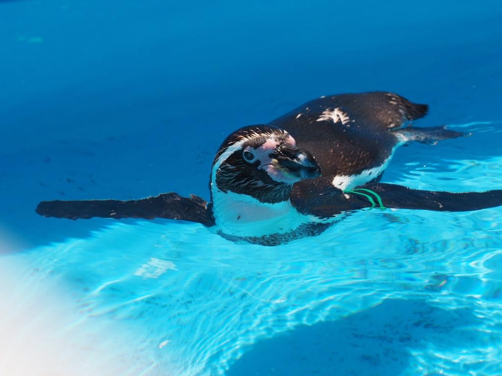 南知多ビーチランド ペンギン