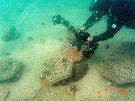Photos: Hong Kong's fragile coral reefs boosted by 3D printing