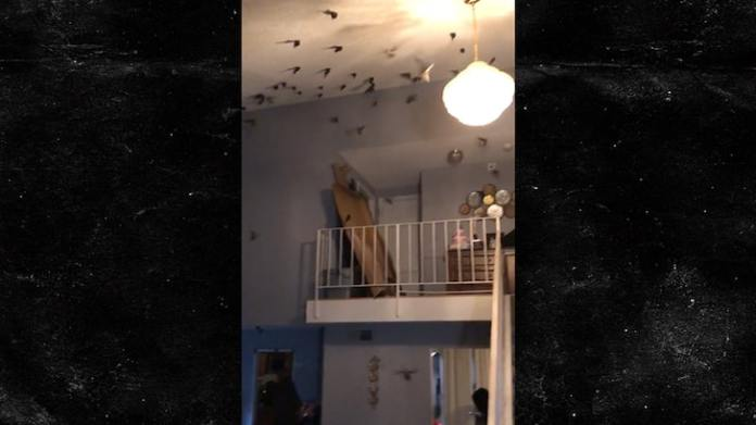 Video Shows Hundreds of Birds Taking Over California Home