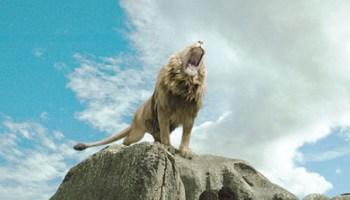 aslan rugissant