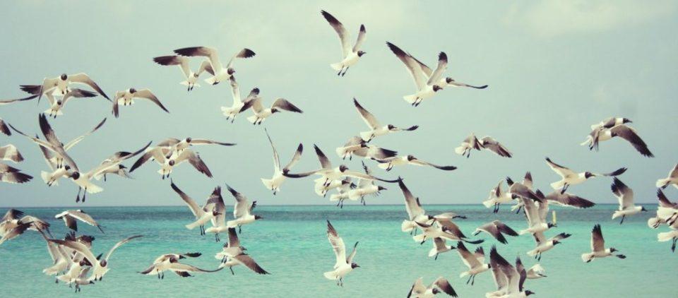 amiamo-la-liberta-vorremmo-saper-volare
