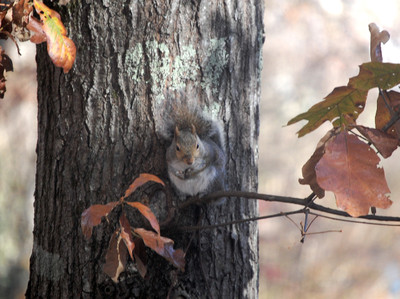 Squirrel_voyeur