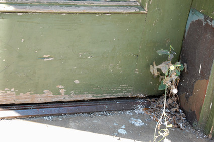 Old_door_and_weeds_in_downtown_chat