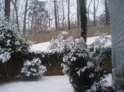 Backyard_view_from_driveway