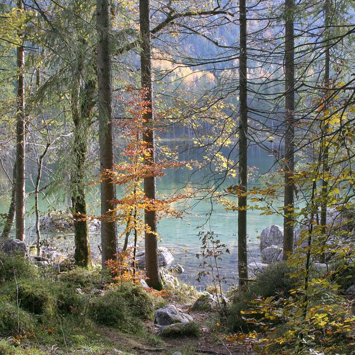 hintersee_zauberwald