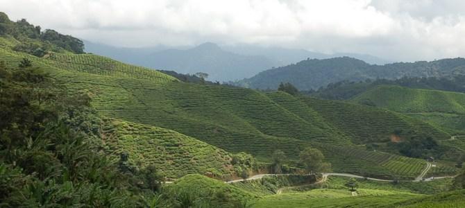 熱帯雨林気候のマレーシアは、涼しい夏の丸沼高原と似ていました。