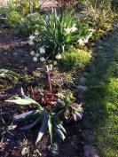 Hård frost 2