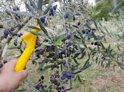 Pension Biba Garden Products 9