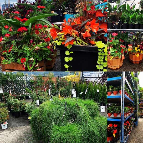 Garden centre in Penticton, annuals, perennials, flowers, vegetables, basket stuffers.