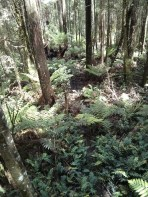 The Forest Floor