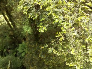 From the Beech Myrtle canopy, to the forest floor