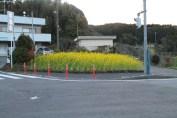 上総亀山 flowers