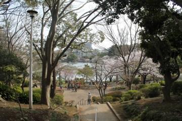 千葉公園 9