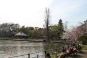 千葉公園 5