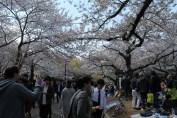 渋谷代々木公園 11