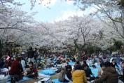 渋谷代々木公園 12