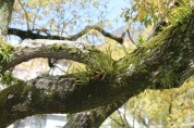 More tree hair