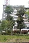 東京上野公園 37