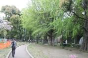東京上野公園 50