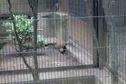東京上野動物園 6