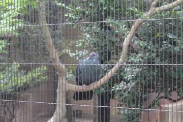 東京上野動物園 9