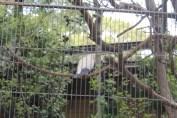 東京上野動物園 15