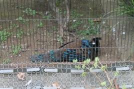 東京上野動物園 21