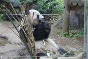 東京上野動物園 26