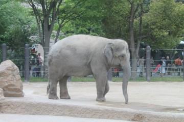東京上野動物園 31