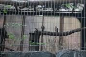 東京上野動物園 38