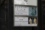 東京上野動物園 39