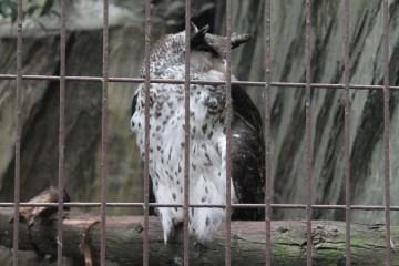 東京上野動物園 42