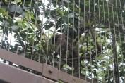 東京上野動物園 47