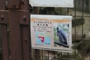 東京上野動物園 52