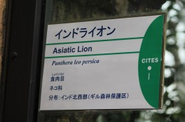 東京上野動物園 68