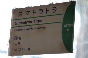 東京上野動物園 69