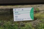 東京上野動物園 73