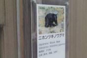 東京上野動物園 81