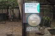 東京上野動物園 87