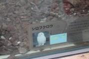 東京上野動物園 95