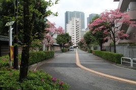A beautiful road on the side of the shrine.