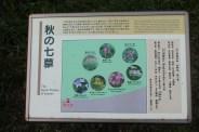 皇居東御苑 52