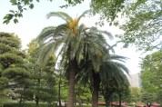 皇居東御苑 74