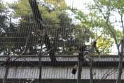 東京上野動物園 113