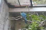東京上野動物園 115