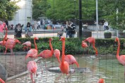 東京上野動物園 127